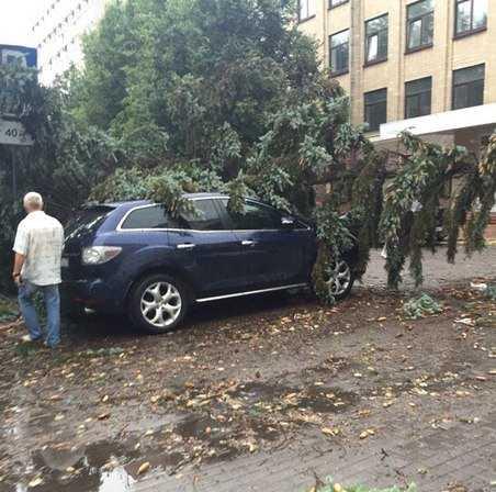 Ураганный ветер повалил в Брянске 29 деревьев