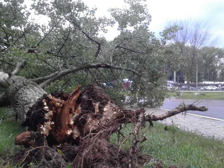 Ураган повалил в Брянске более 100 деревьев, одно придавило женщину