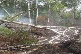 На юго-западе Брянской области горели торфянники