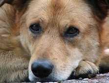 В центре Брянска психопат с винтовкой расстрелял из окна собак