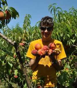 На брянском полигоне уничтожат первые 60 тонн персиков