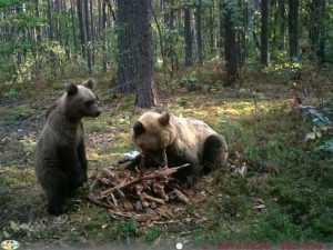 «Брянский лес» сразится в первом конкурсе фотоловушек
