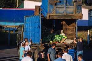 На брянской границе уничтожили «запрещенку» из Европы