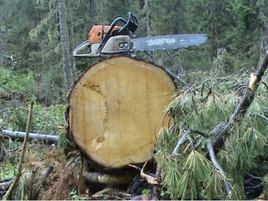 Суд запретил брянцу валить лес