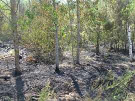 В Брянской области загорелся лес
