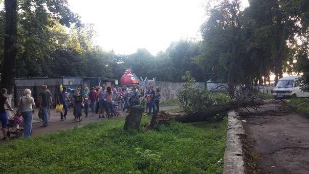 В Брянске гнилое дерево придавило детскую коляску