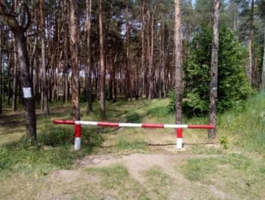 Брянцам снова запретят посещать леса