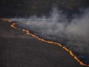 Cпасатели не могут справиться с огнем в чернобыльской зоне