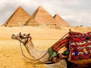 Более 60 человек скончались в Египте из-за жары