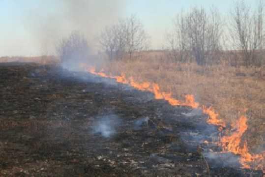 Торфяной пожар в Брянской области тушили более четырёх часов