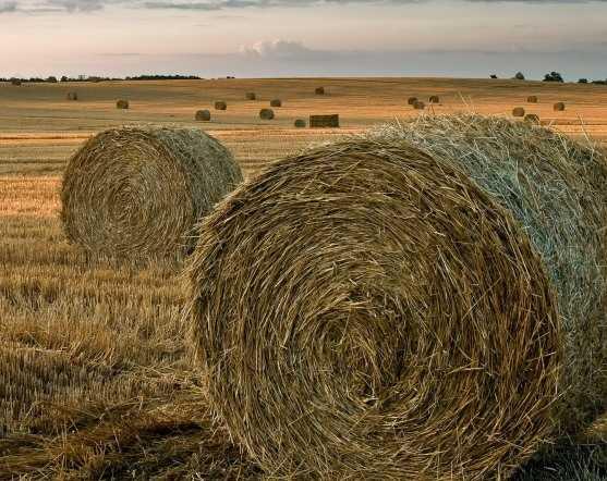 Злые духи лишили брянских буренок сена