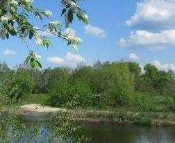 Брянские чиновники разрешили застраивать городские леса
