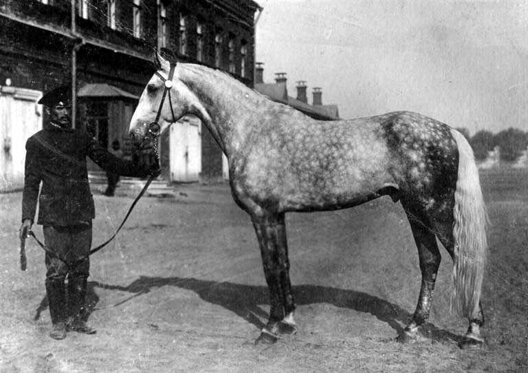 В Брянске купаются лошади в Десне