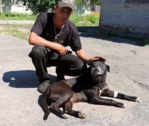 В Новозыбкове собака защитила женщину от гадюки