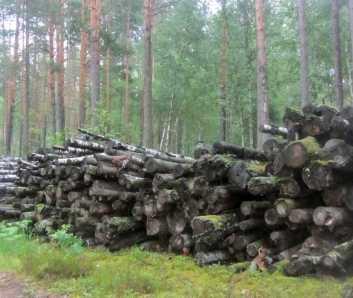 Брянские «фронтовики» решили пойти в лес