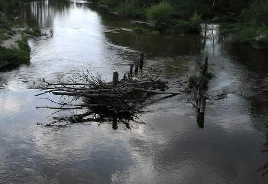 Правительство выделило Брянской области 125 миллионов на село и пруды