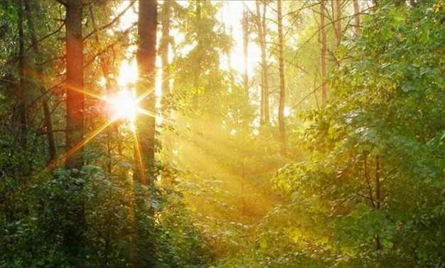 Брянский лес принес в бюджет 6 миллионов рублей