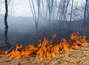 В Брянской области весь день горел лес
