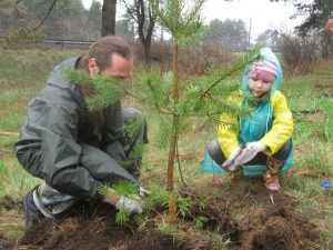 Покупатели автомобилей будут сажать деревья в Брянске