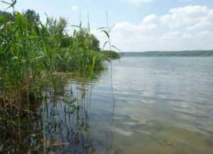В брянской реке обнаружили тело мужчины