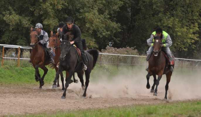 Кубок брянского губернатора разыграют конники в Локте