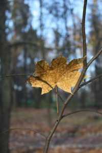 Сентябрь на Брянщине будет теплым