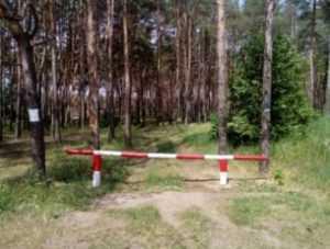 Брянцам снова запретят ходить в леса и сжигать траву
