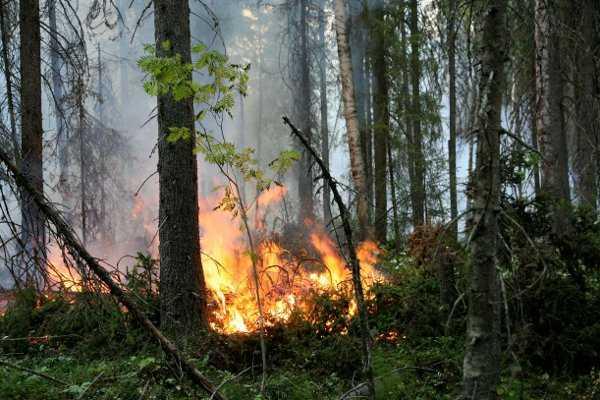 Крупный лесной пожар погасили в Брянском районе