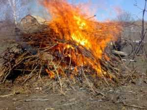 В Брянске спасатели потушили горевший мусор