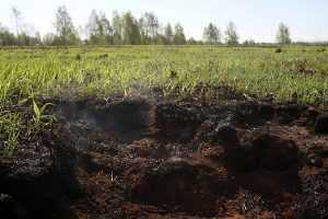 В Брянской области загорелись торфяники