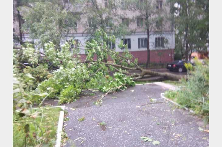 Брянских чиновников признали ответственными за падения деревьев