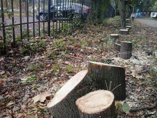 Полсотни деревьев спилили на липовой аллее в Брянске около стоянки