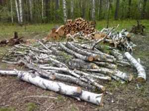 Брянского лесоруба наказали условно за 17 спиленных берёз