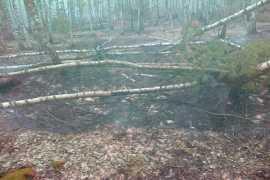 Два торфяных пожара погасили в брянских районах