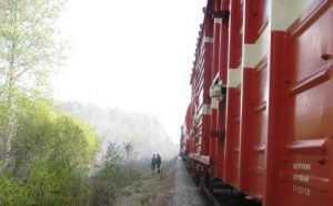 Для тушения лесного пожара под Брянском задействовали поезд