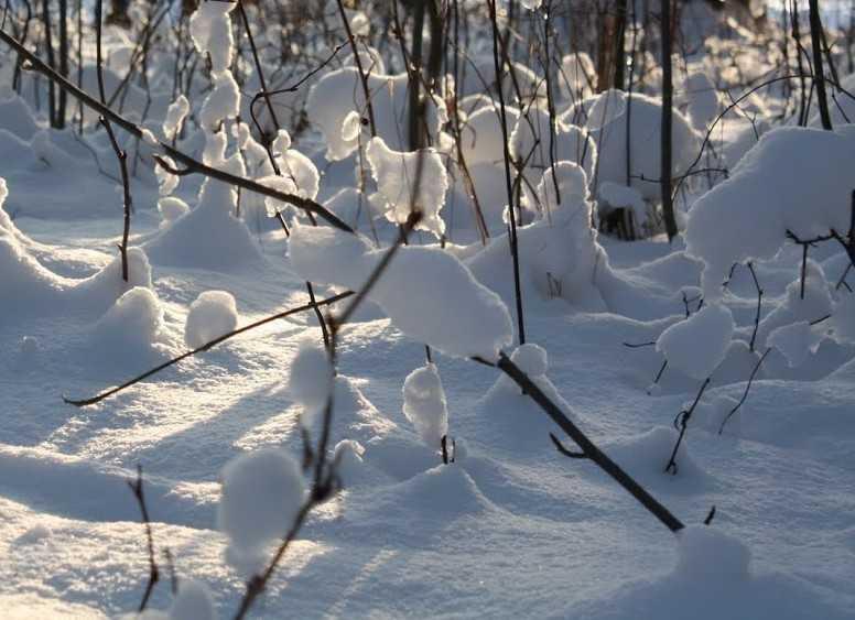Ночью на Брянщину пожалует пятиградусный мороз