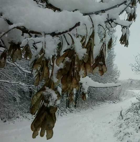 В пятницу Брянск может накрыть первый снег