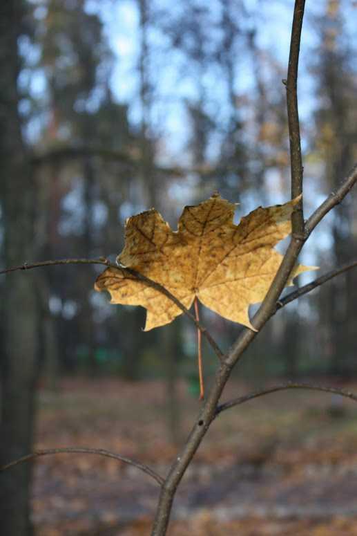 Американец стал продавать осеннюю листву по 20 долларов
