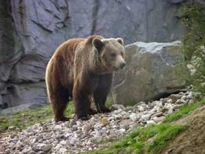 Медведь погулял по гипермаркету