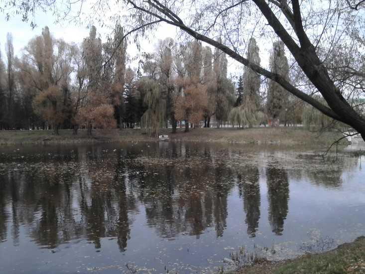 Ночные заморозки в Брянске продлятся до конца недели
