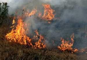 В Выгоничском районе Брянской области потушили торфяной пожар