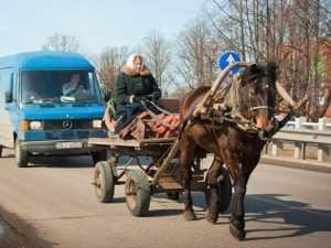 Под Брянском пенсионерка на телеге столкнулась с иномаркой