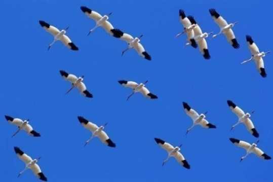 Над Брянском пролетят «Белые журавли»
