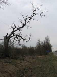 Брянские чернобыльцы будут судиться за свои льготы