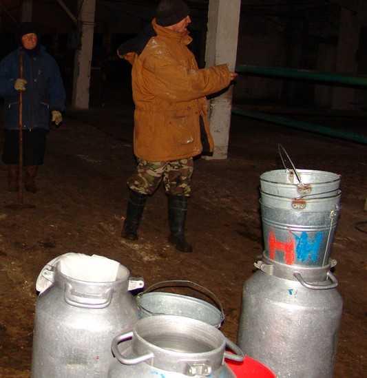 Брянскую область залили поддельным молоком