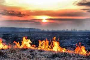 Брянские пожарные потушили пожар в Злынковском районе