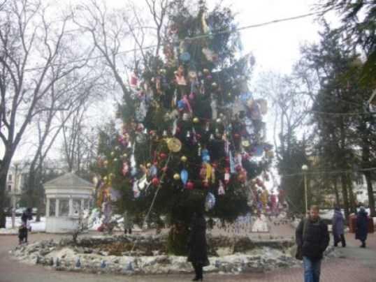 В Брянске начались поиски главной новогодней ёлки города