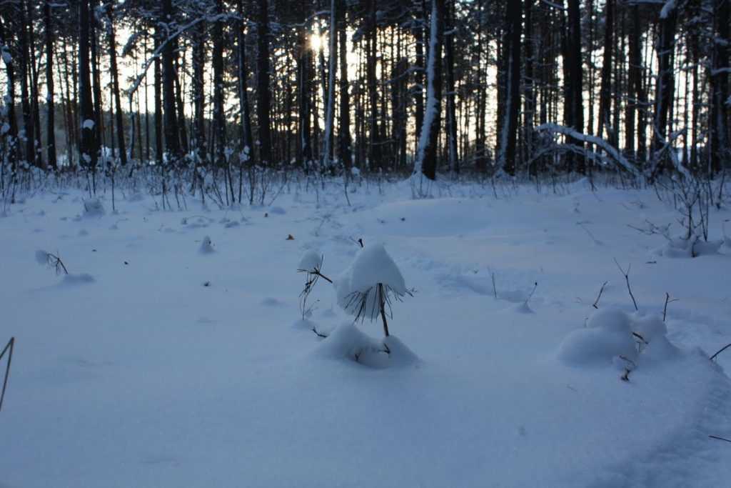 Первый снег в Брянской области могут увидеть на следующей неделе