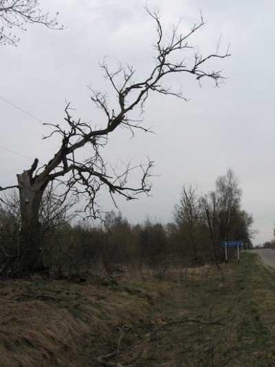 Брянцы подсчитали чернобыльские потери