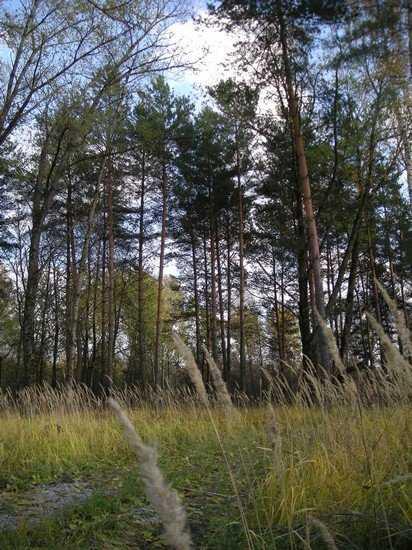 Арендаторы забрали у народа 77 процентов брянского леса